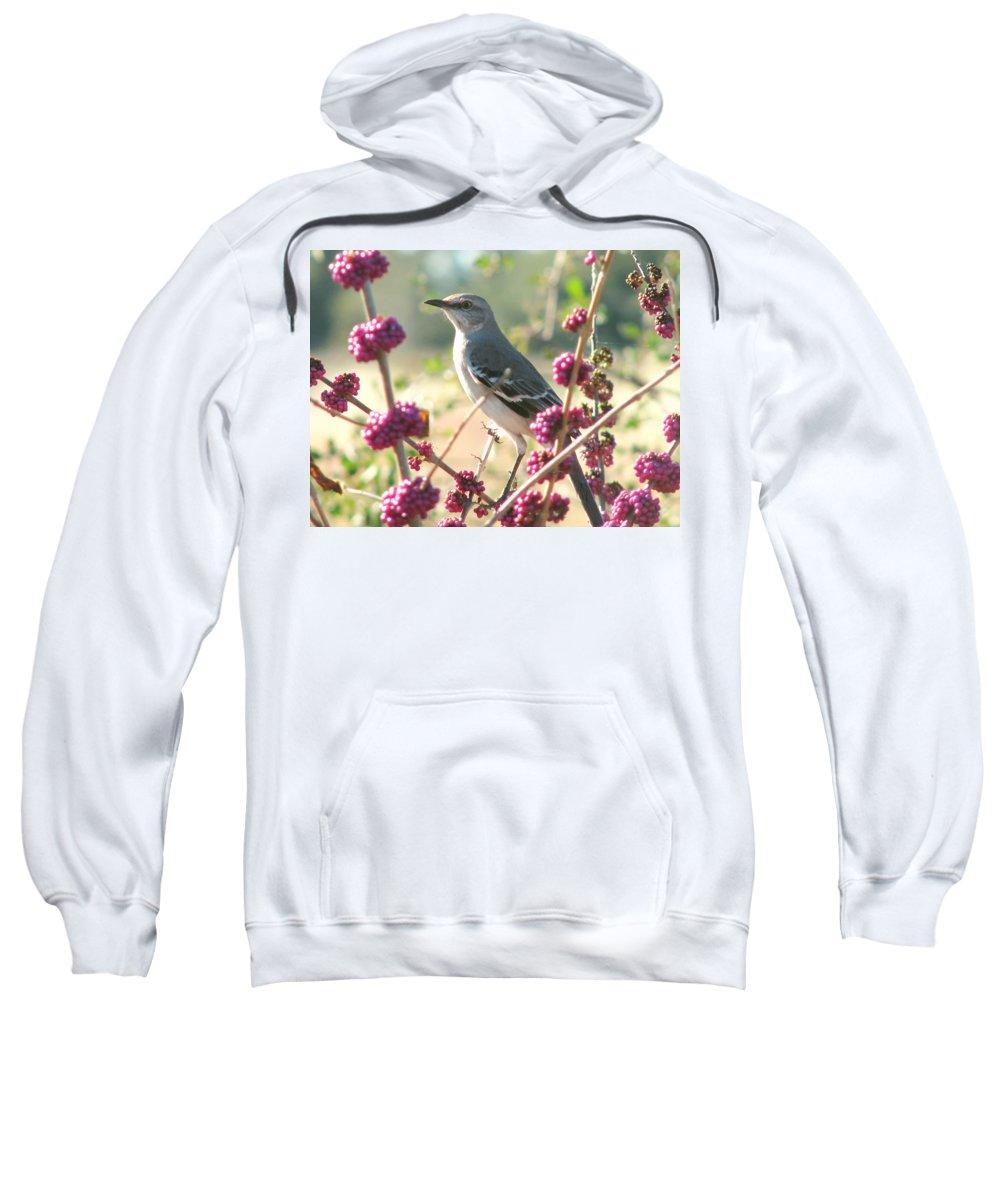 Nature Sweatshirt featuring the photograph Mockingbird Heaven by Peg Urban