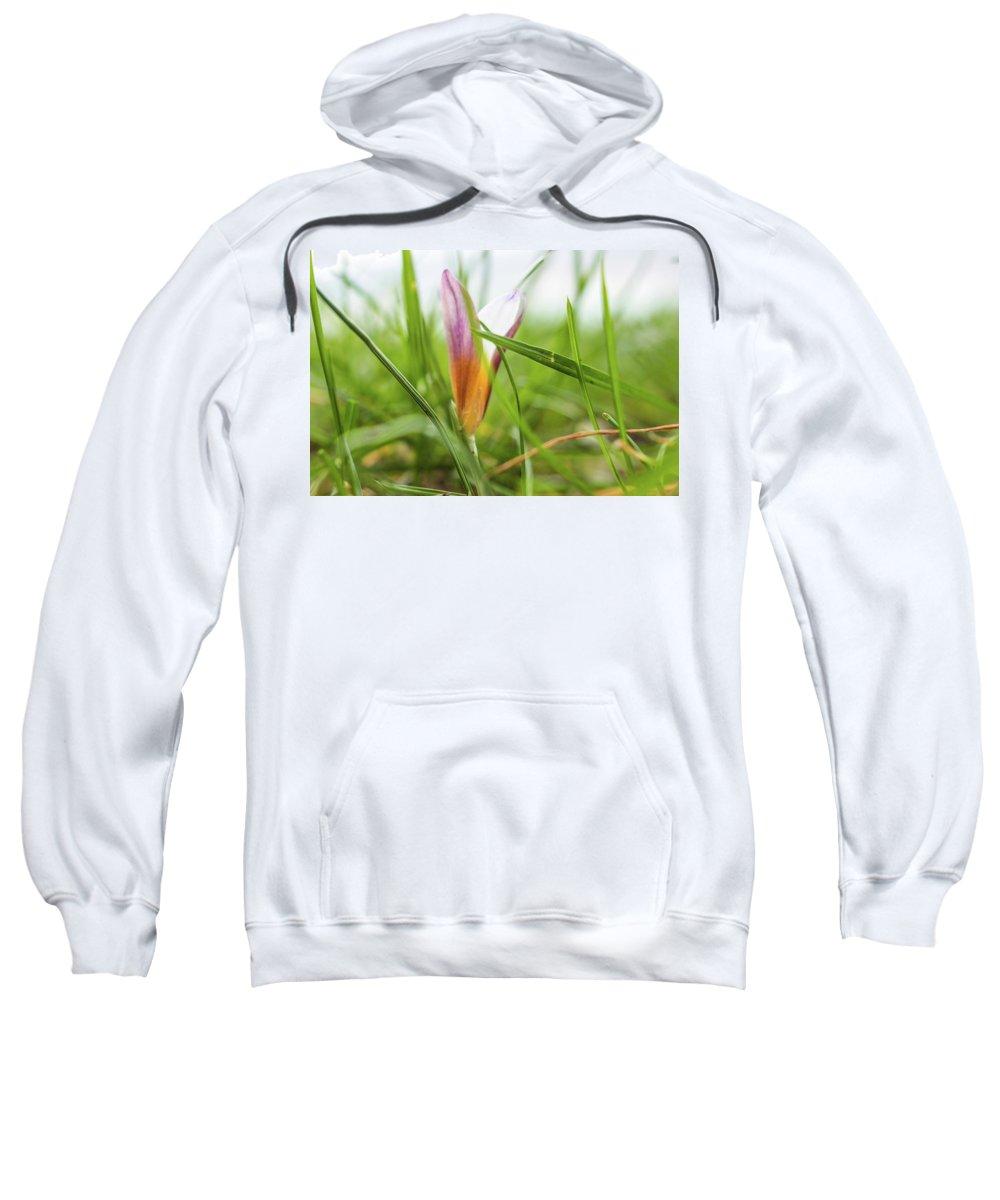 Sweatshirt featuring the photograph Morning Dream by Vesna Grgurevic