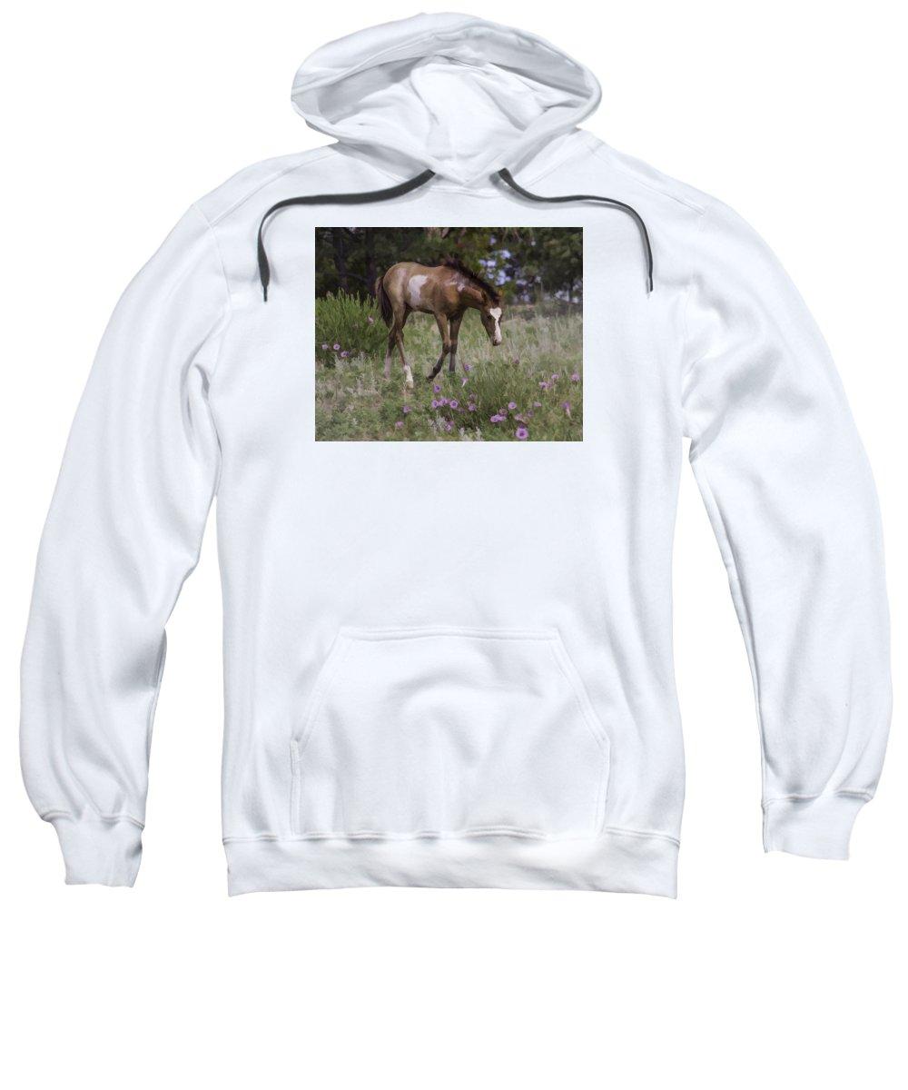 South Dakota Sweatshirt featuring the photograph Morning Glory by Elizabeth Eldridge