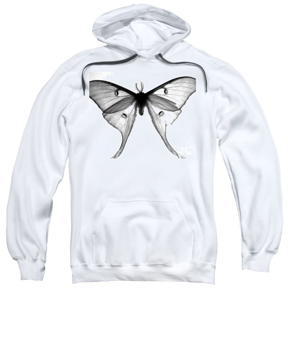 Moth Sweatshirt featuring the photograph Moth by Amanda Barcon