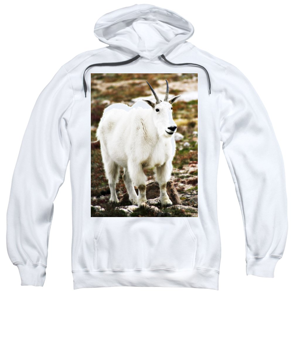 Animal Sweatshirt featuring the photograph Mountain Goat by Marilyn Hunt