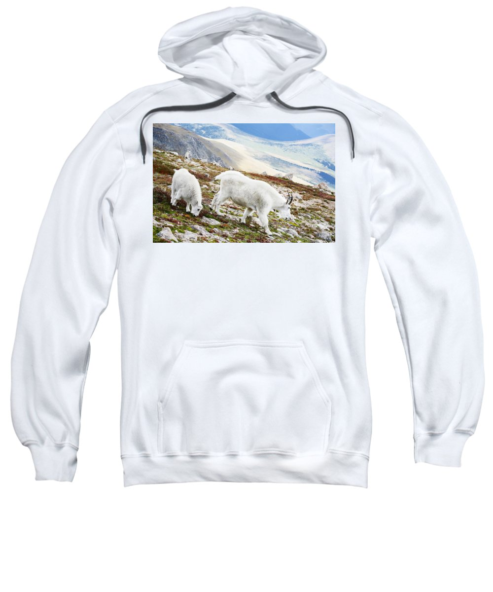 Mountain Sweatshirt featuring the photograph Mountain Goats 1 by Marilyn Hunt