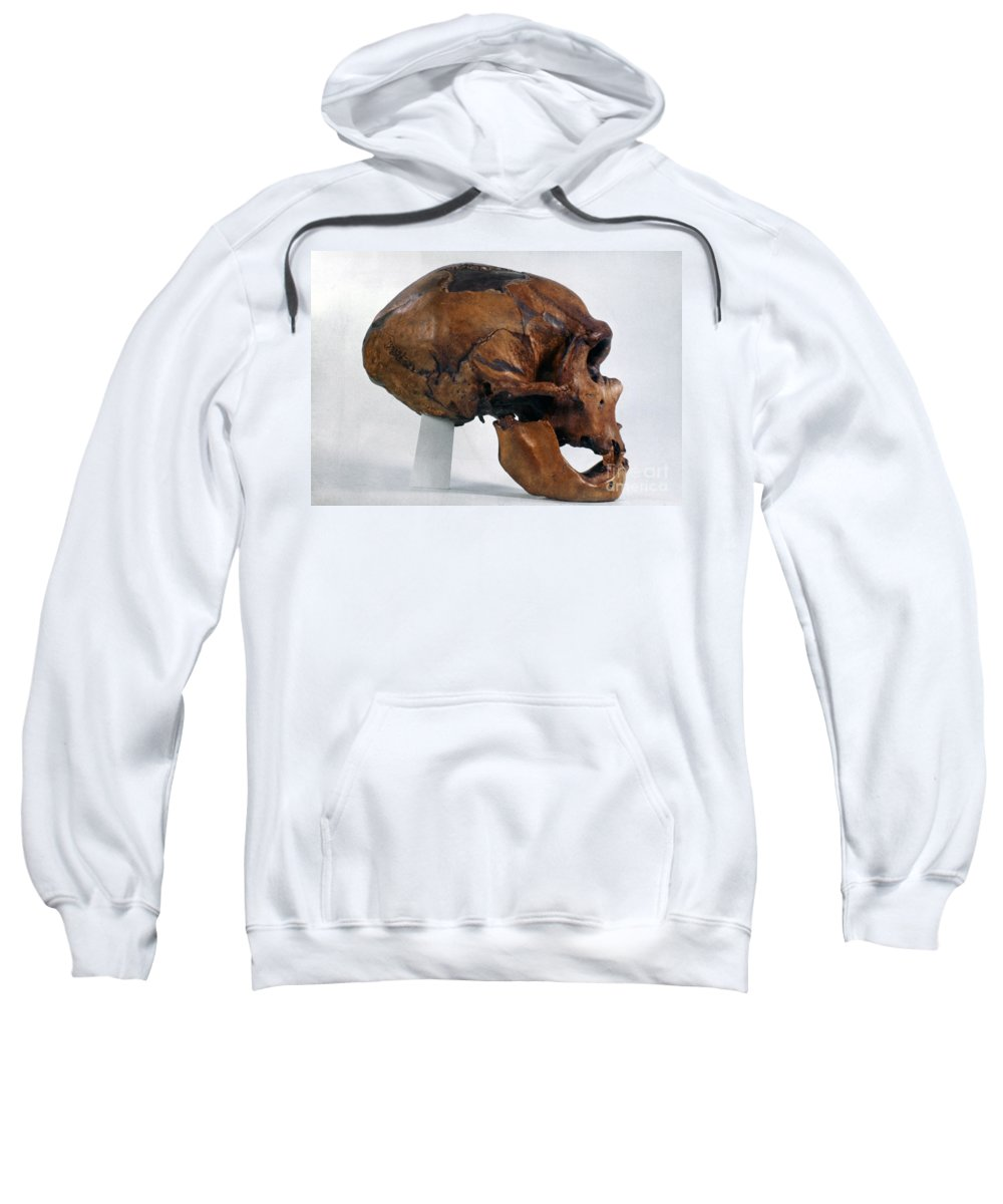 Artifact Sweatshirt featuring the photograph Neanderthal Skull by Granger