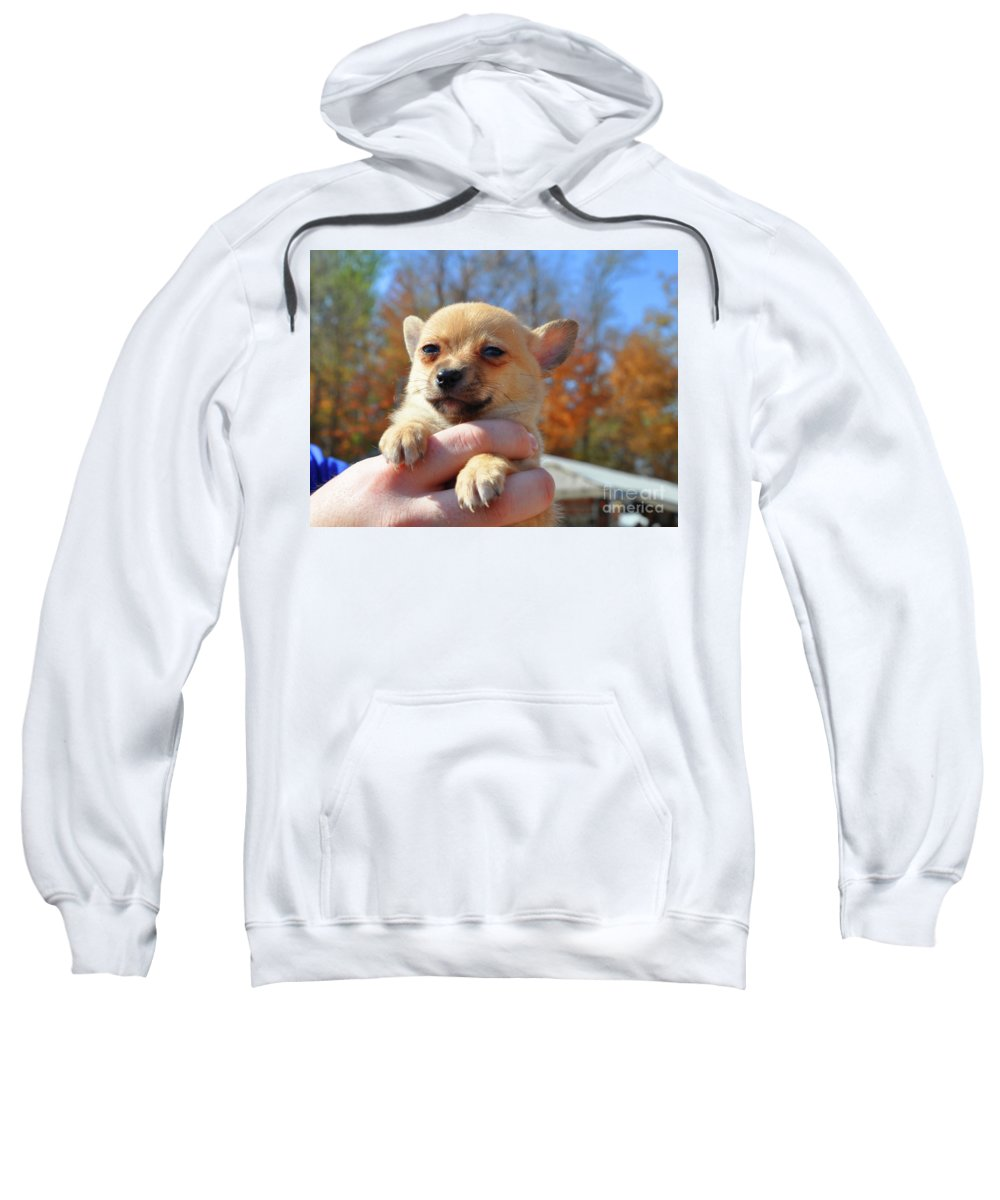 Baby Puppy Sweatshirt featuring the photograph Need Somebody To Love by Brittany Horton