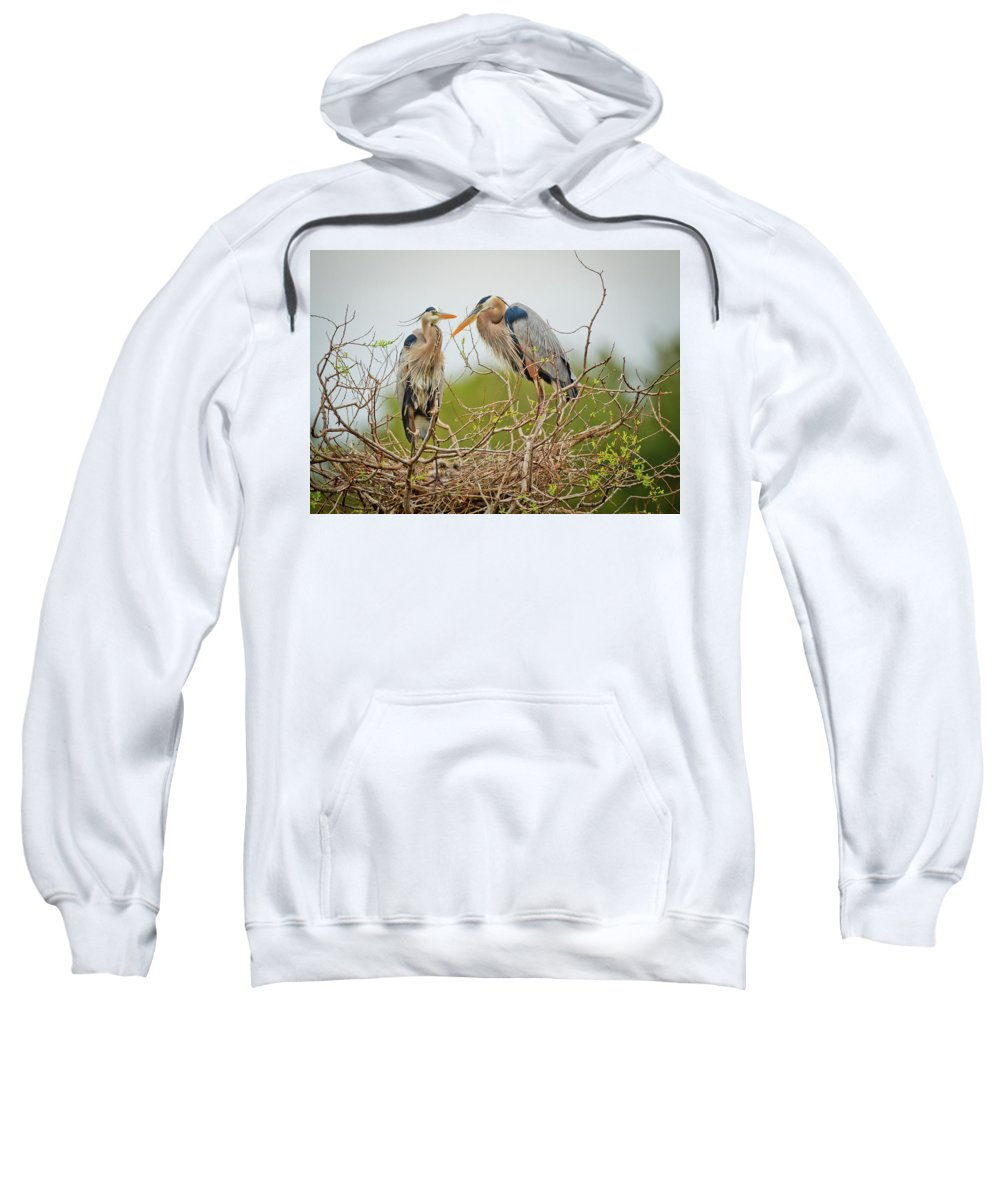 Blue Herons Sweatshirt featuring the photograph Nesting Blue's by Dennis Goodman