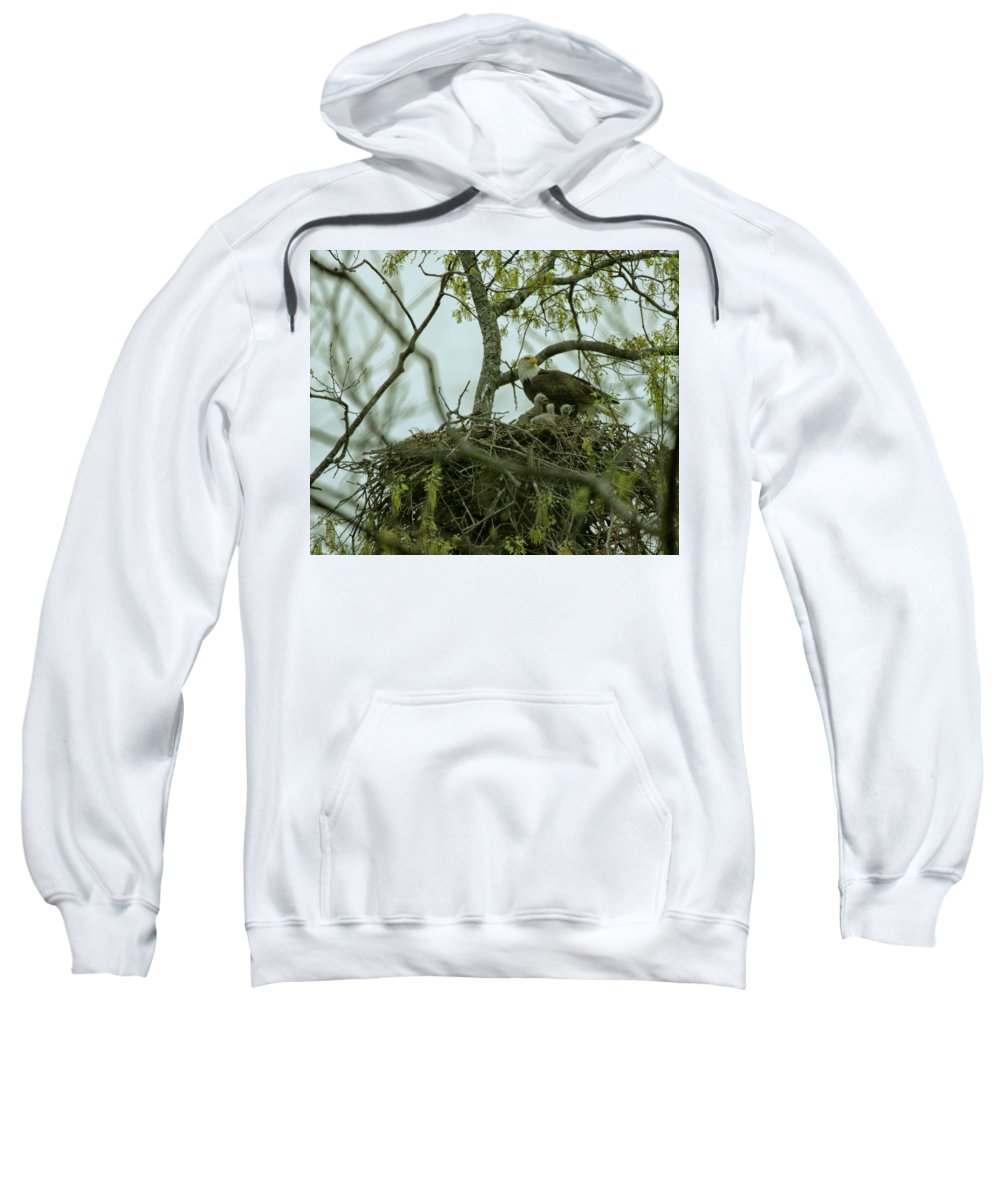 Bale Eagle Sweatshirt featuring the photograph Nestlings by John Prickett