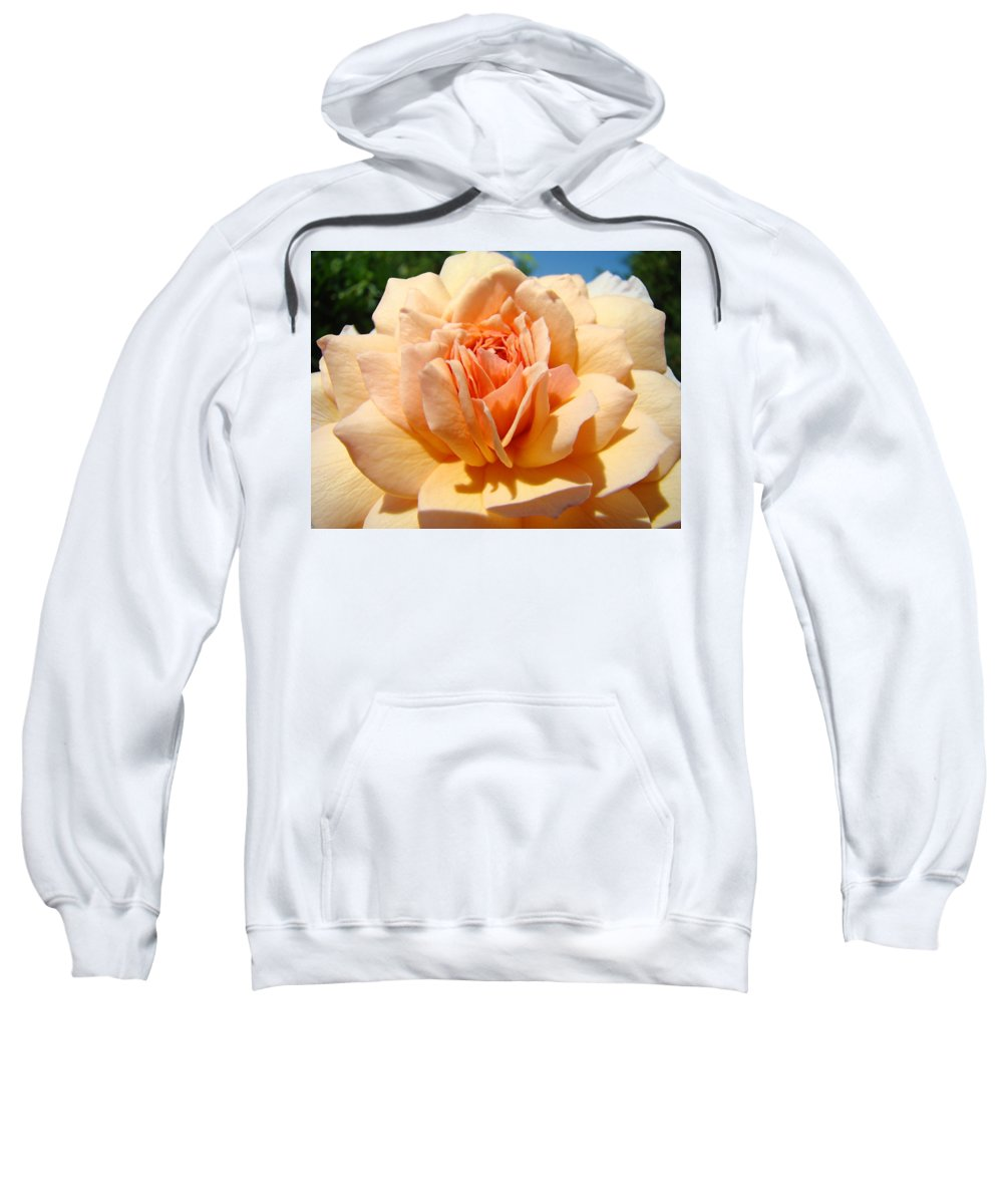 Rose Sweatshirt featuring the photograph Office Artwork Roses Peach Rose Flower Giclee Baslee Troutman by Baslee Troutman