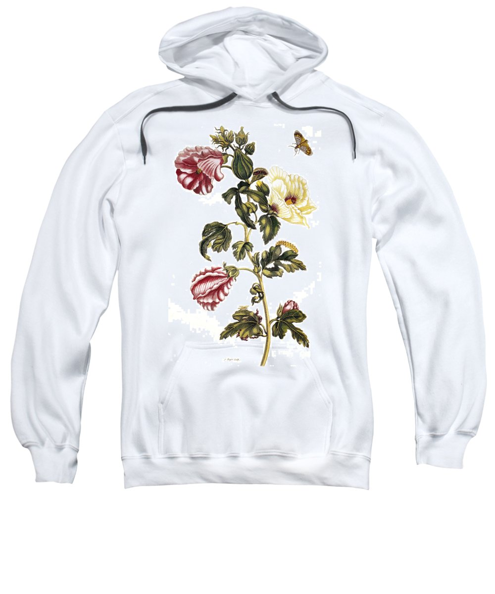 1705 Sweatshirt featuring the photograph Okra by Granger