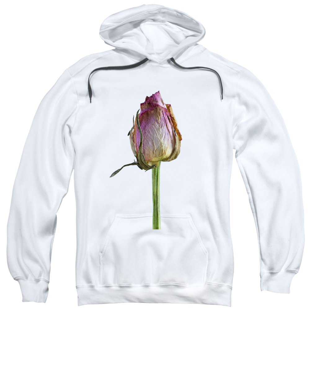Summer Sweatshirt featuring the photograph Old Rose On Paper by Jon Delorme