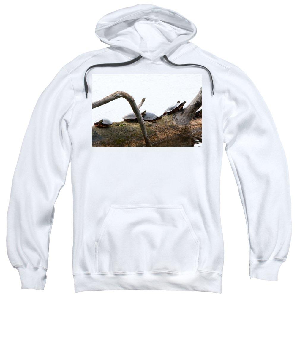 Seney Wetland Sweatshirt featuring the photograph One Hiding Turtle by Linda Kerkau