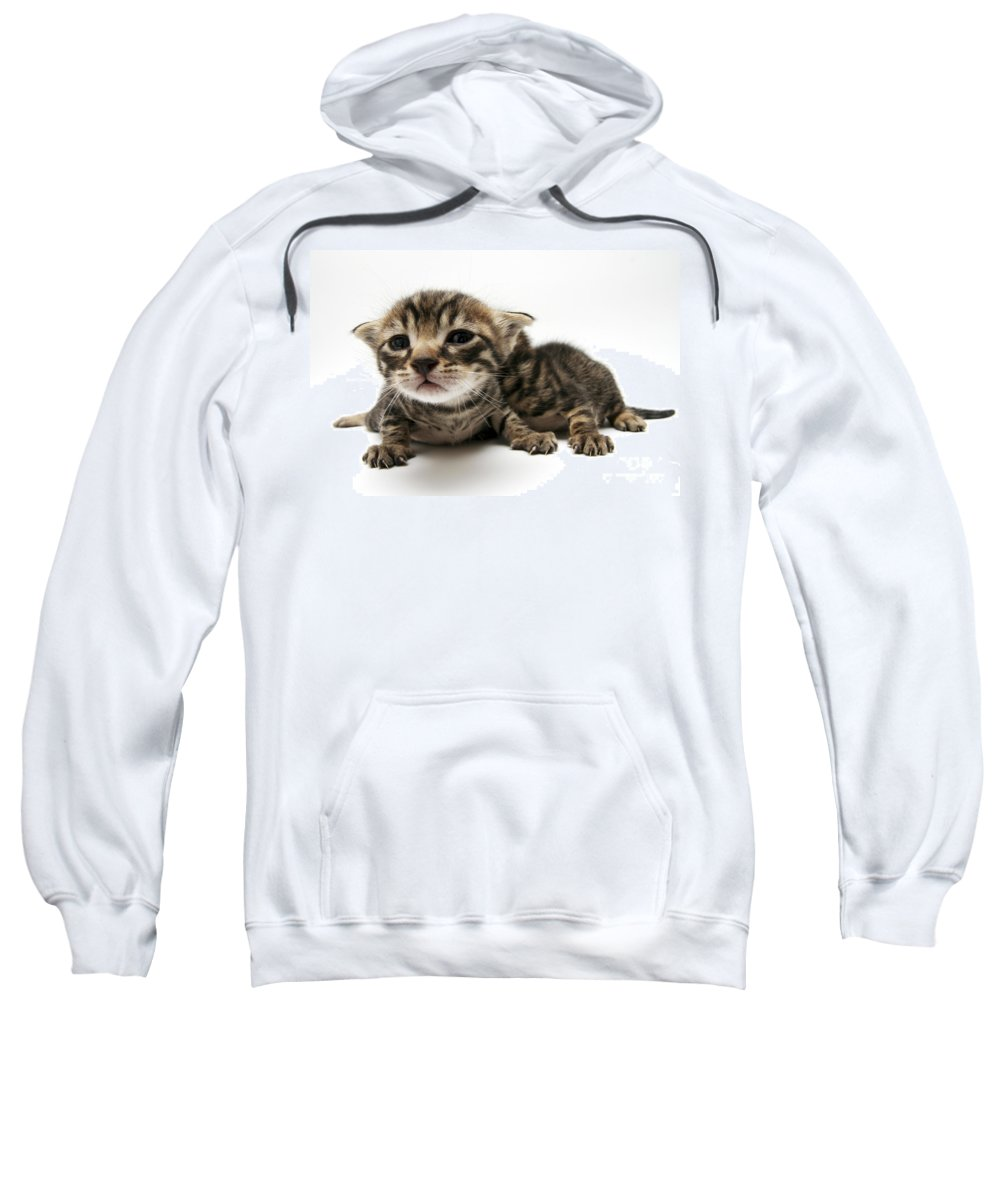 Cat Sweatshirt featuring the photograph One Week Old Kittens by Yedidya yos mizrachi