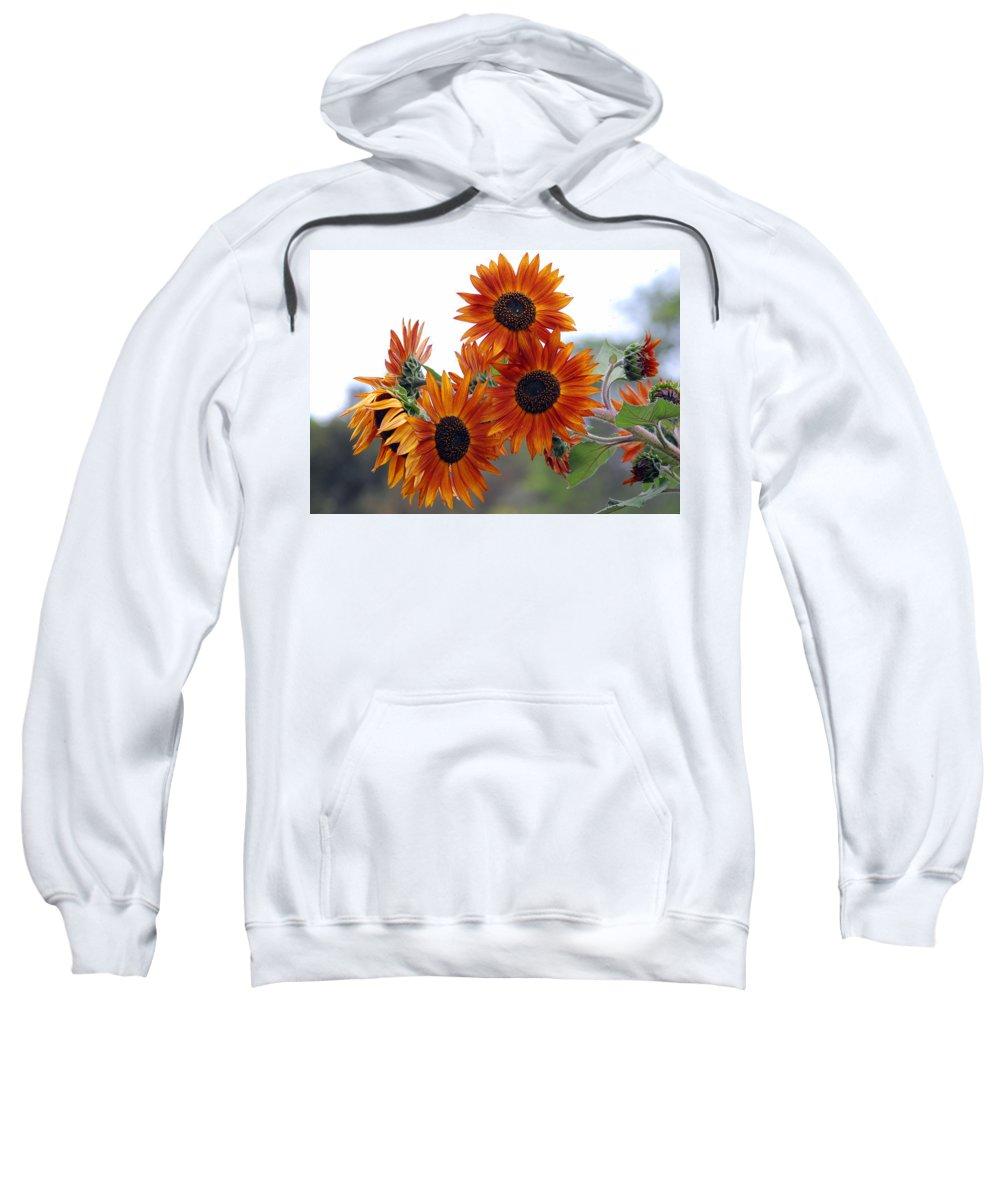 Sunflower Sweatshirt featuring the photograph Orange Sunflower 1 by Amy Fose