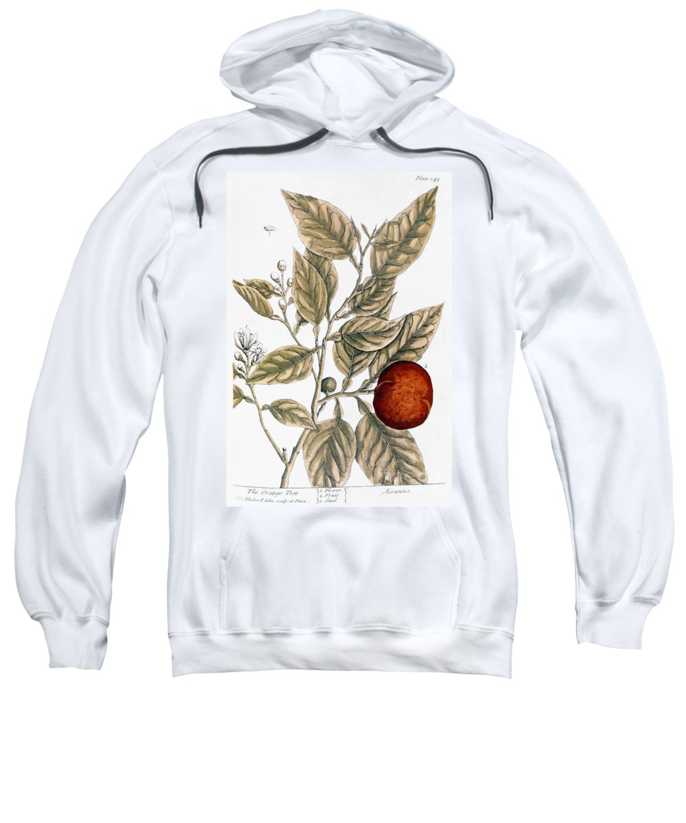 1730s Sweatshirt featuring the photograph Orange Tree, 1735 by Granger