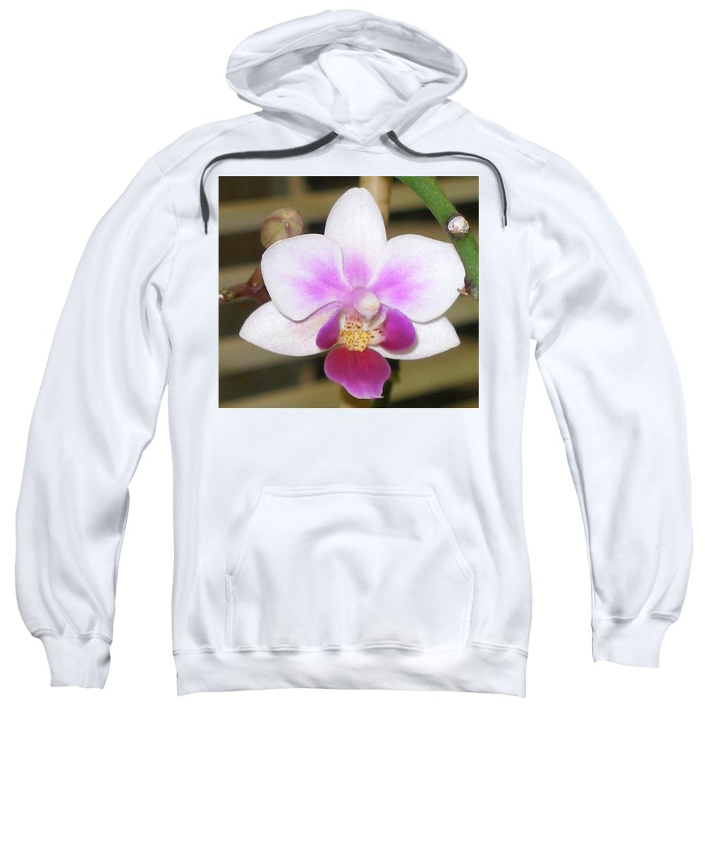 Purple Sweatshirt featuring the photograph Orchid Explosion by Maria Bonnier-Perez