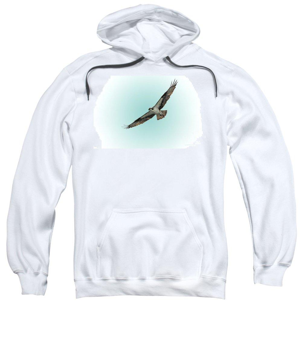 Bird Sweatshirt featuring the photograph Osprey Soar 2 by Deborah Benoit