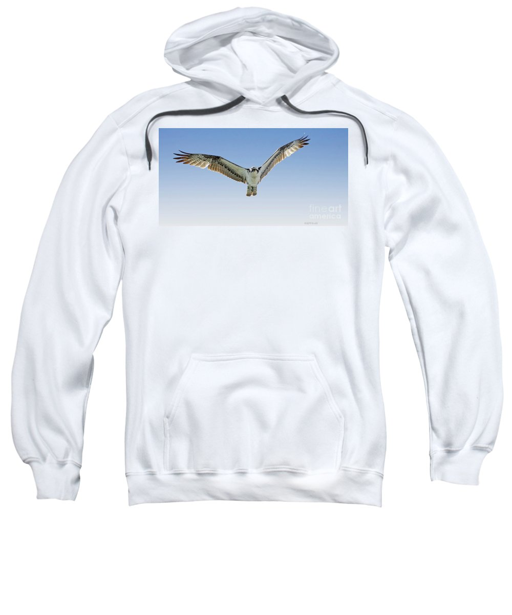 Osprey Sweatshirt featuring the photograph Osprey Soar Search by Deborah Benoit