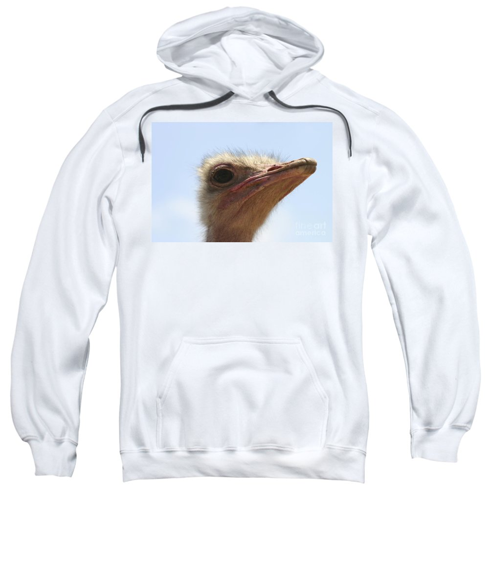 Ostrich Sweatshirt featuring the photograph Ostrich Head Close Up by Danny Yanai