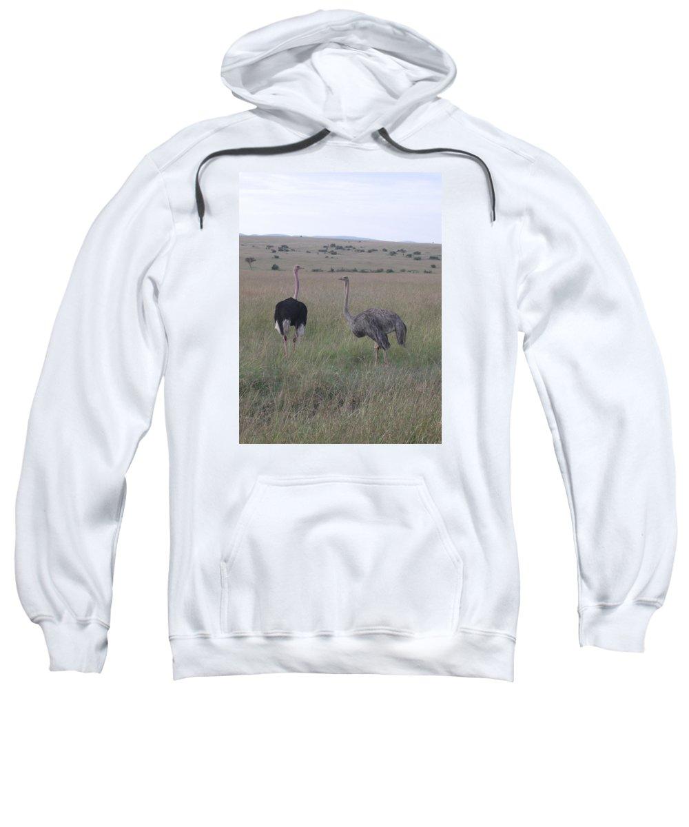 Ostrich Sweatshirt featuring the photograph Ostrich Love by Mohamed El Zaafarani
