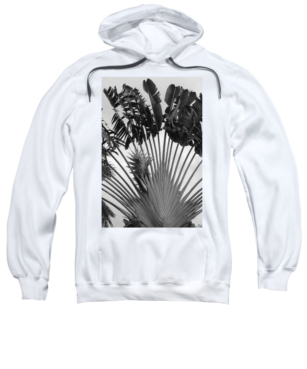 Macro Sweatshirt featuring the photograph Palm Frons by Rob Hans