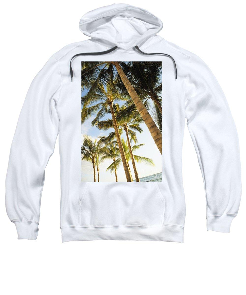 41-pfs0103 Sweatshirt featuring the photograph Palms Against Blue Sky by Dana Edmunds - Printscapes