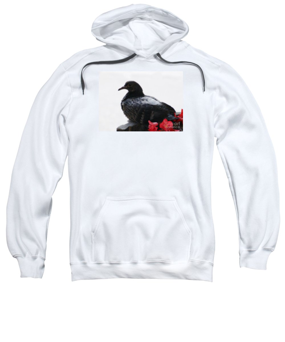 Bird Sweatshirt featuring the photograph Peaceful Garden - 2 by Linda Shafer