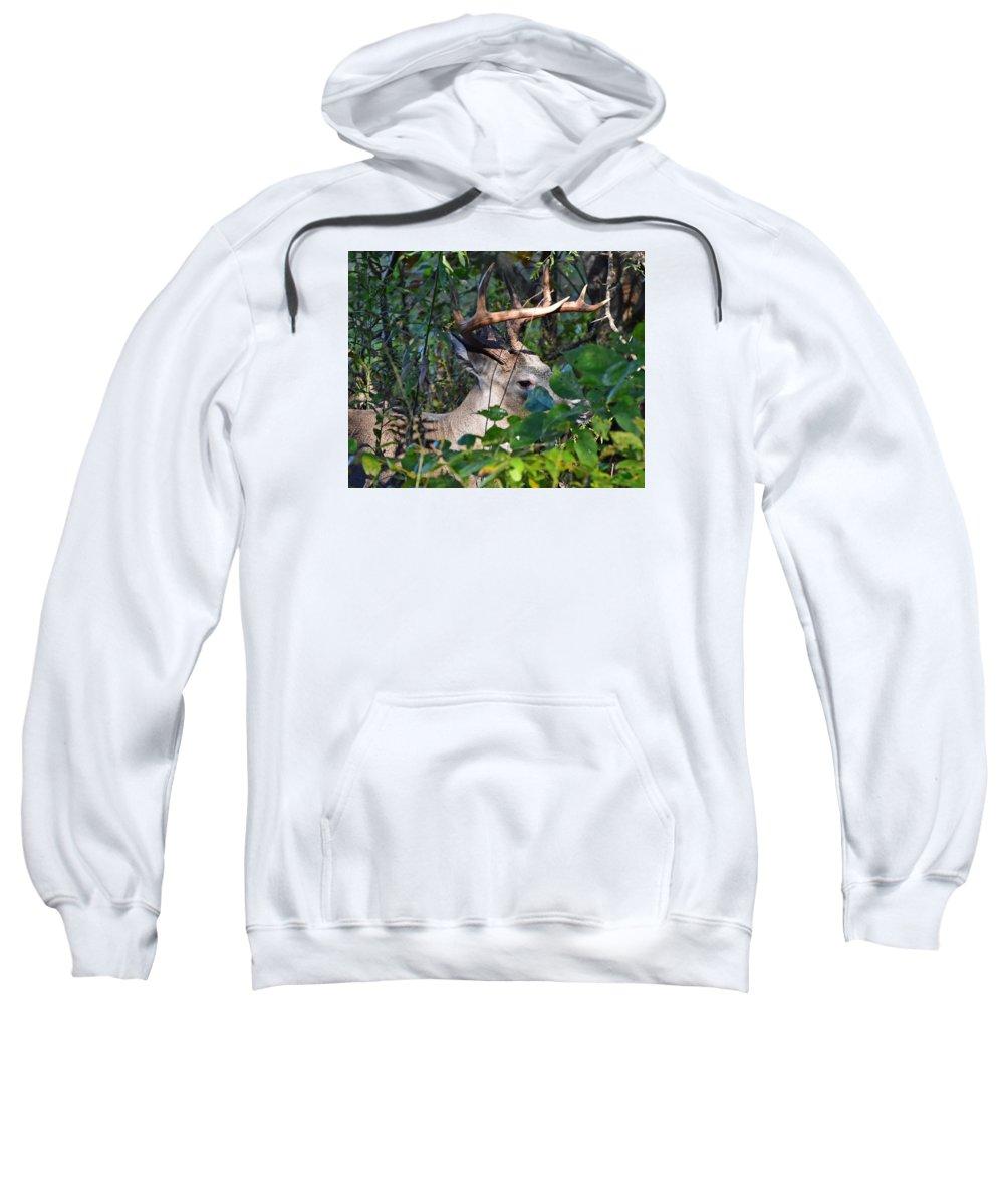 Ann Keisling Sweatshirt featuring the photograph Peeking Through The Trees by Ann Keisling