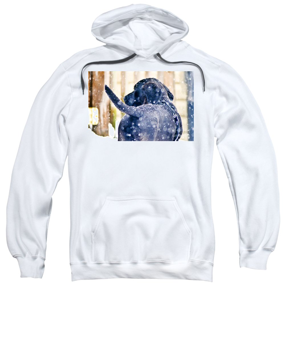 Pepper Sweatshirt featuring the photograph Pepper And The Snow Storm by PatriZio M Busnel