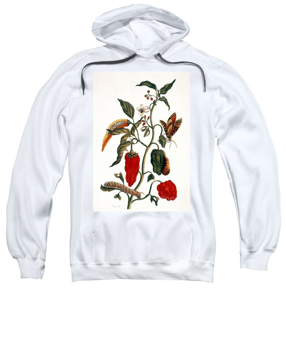 1726 Sweatshirt featuring the photograph Pepper Plant by Granger