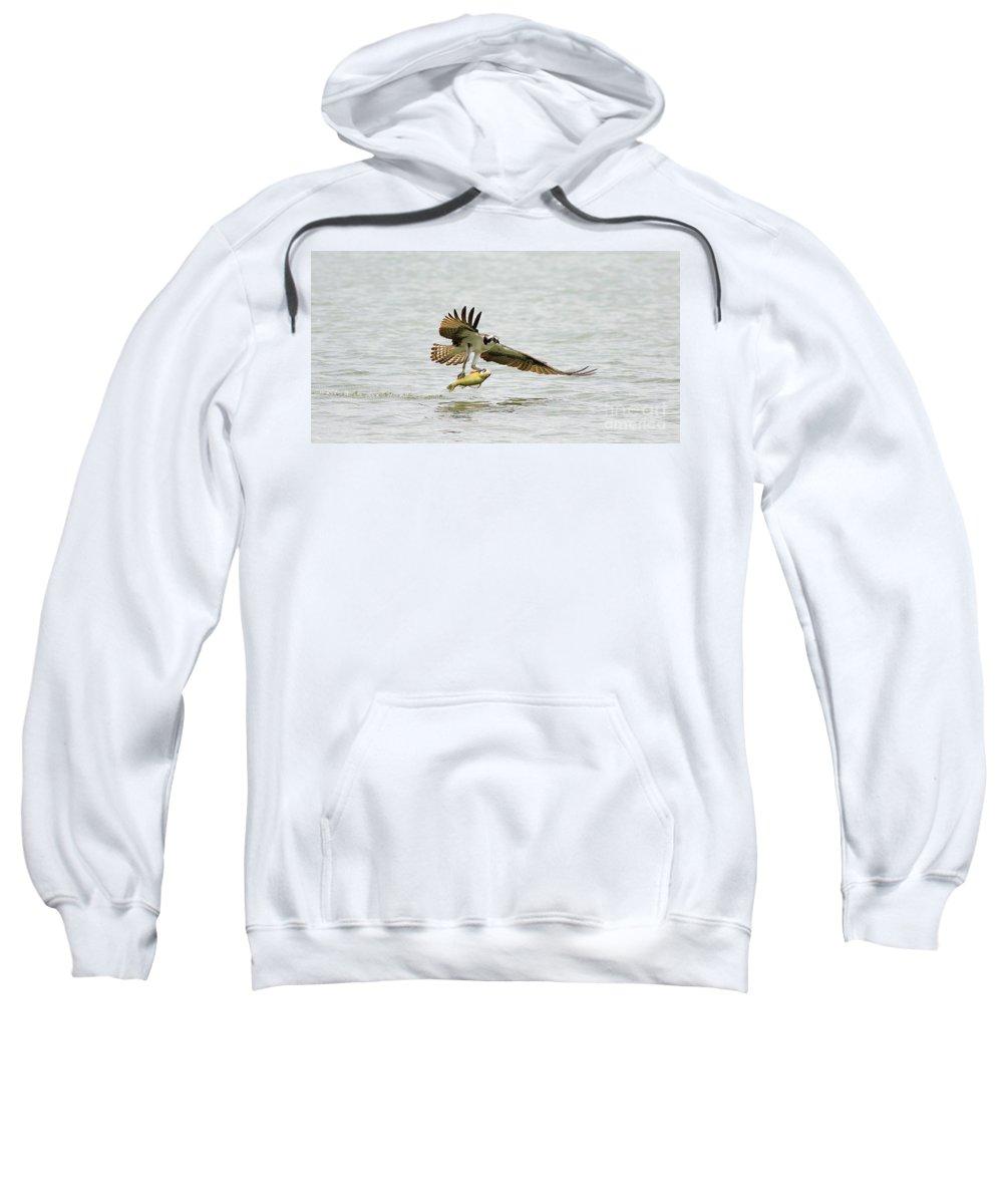Osprey Sweatshirt featuring the photograph Perch On The Run 2 by Deborah Benoit