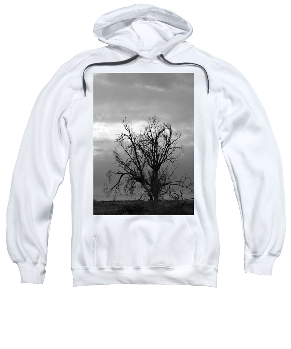 Bird Sweatshirt featuring the photograph Perched by Sharon Horning