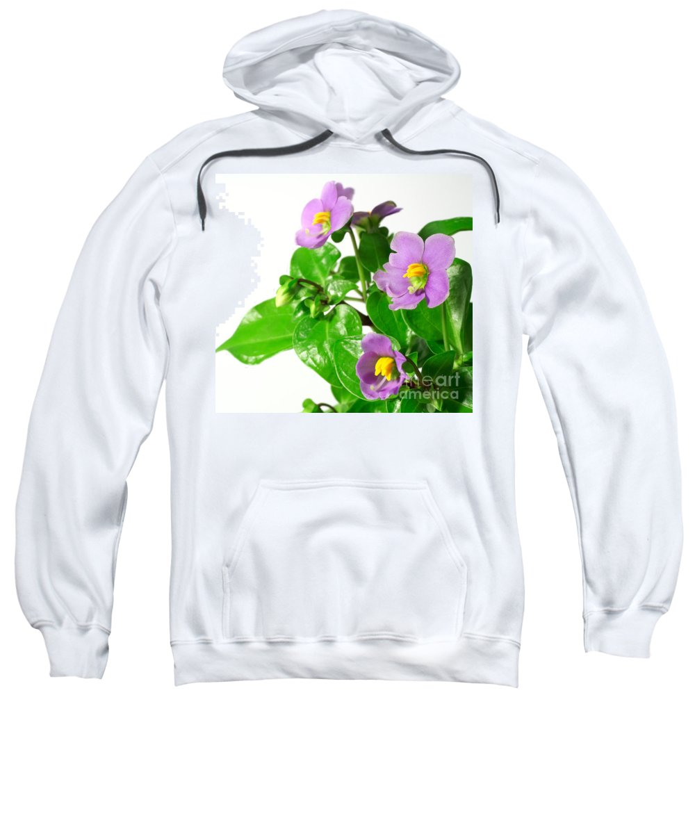 Closeup Sweatshirt featuring the photograph Persian Violets by Gaspar Avila
