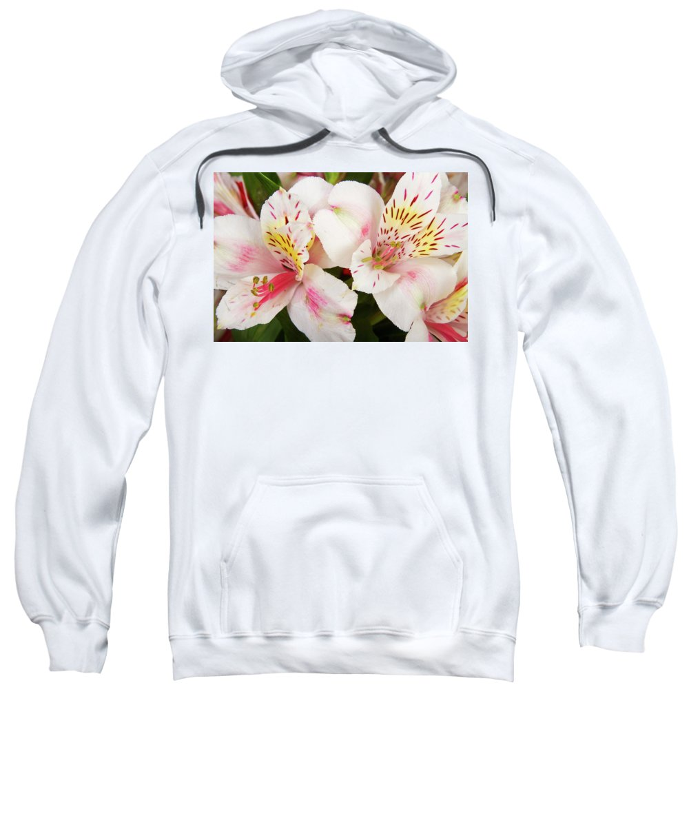 Peruvian Lilies Sweatshirt featuring the photograph Peruvian Lilies Flowers White And Pink Color Print by James BO Insogna