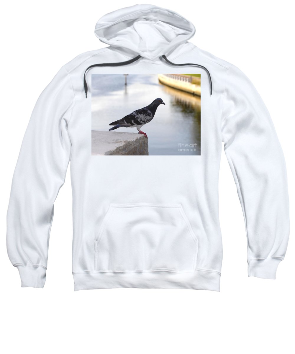 Pigeon Sweatshirt featuring the photograph Pigeon By The River by David Lee Thompson