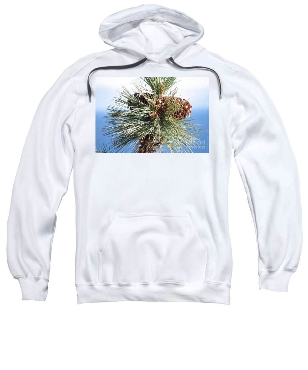Pine Cones Sweatshirt featuring the photograph Pine Cones Over Lake Tahoe by Carol Groenen