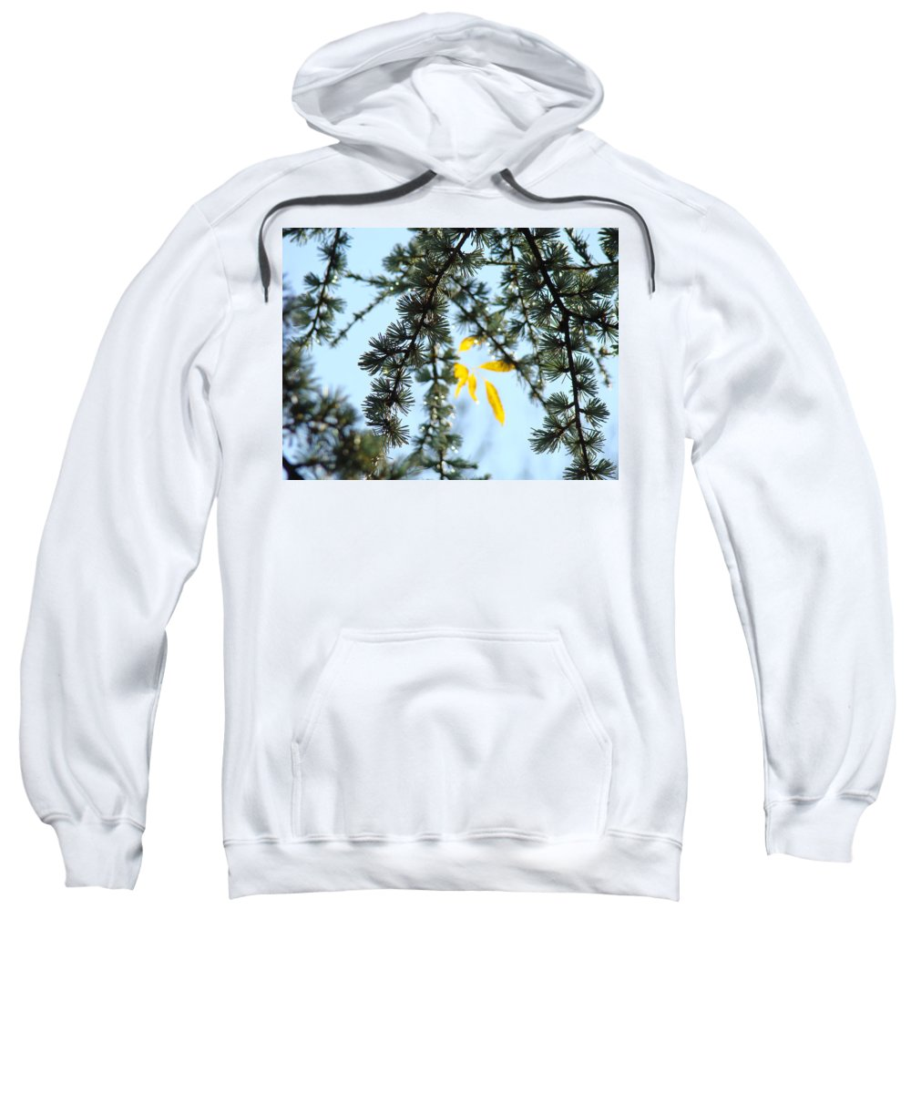Autumn Sweatshirt featuring the photograph Pine Tree Art Prints Blue Sky Yellow Fall Leaves by Baslee Troutman