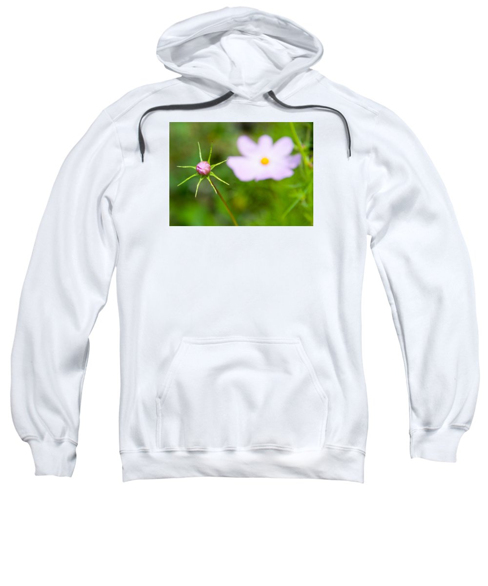 Cosmos Flower Sweatshirt featuring the photograph Pink Cosmos Bud by Helen Northcott
