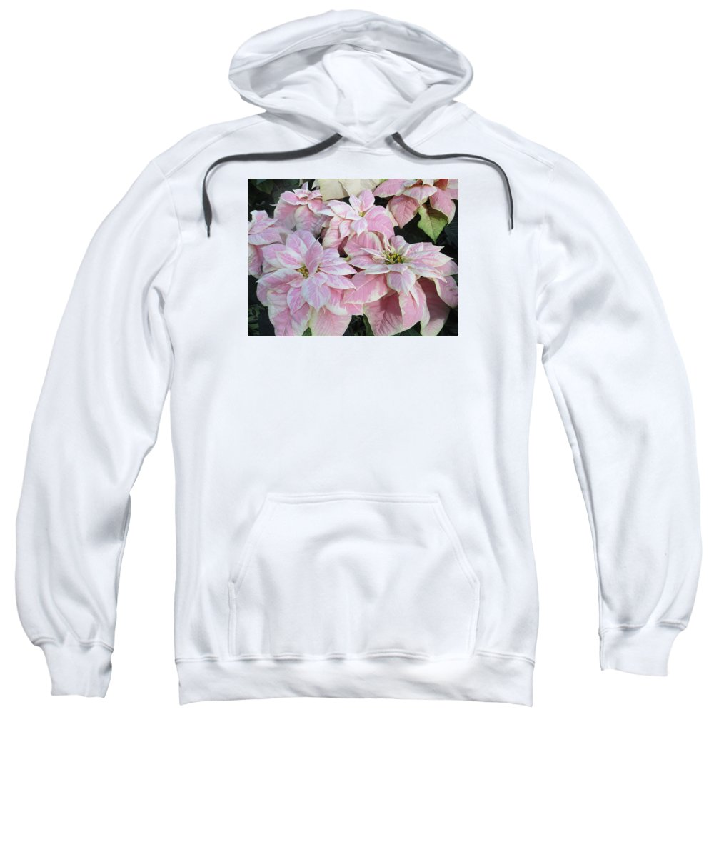 Flora Sweatshirt featuring the photograph Pink Poinsettias by Cindy Kellogg