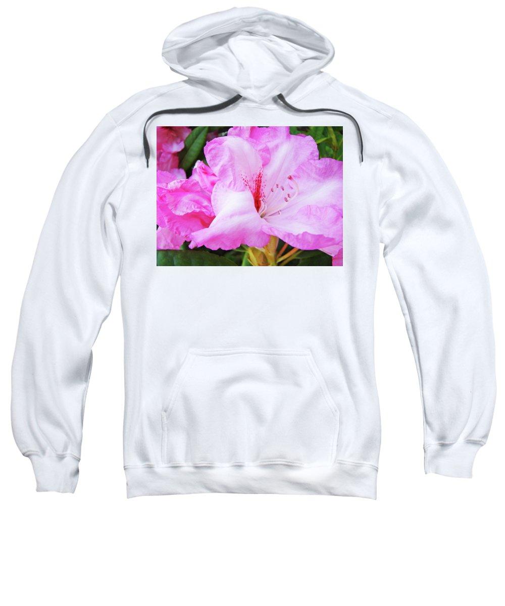 Rhodie Sweatshirt featuring the photograph Pink Rhododendron Art Print Floral Canvas Rhodies Baslee Troutman by Baslee Troutman