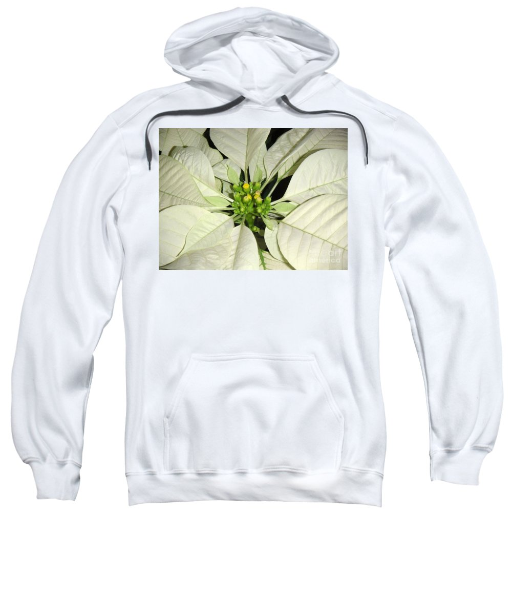 Nature Sweatshirt featuring the photograph Poinsettias - Winter White Center by Lucyna A M Green