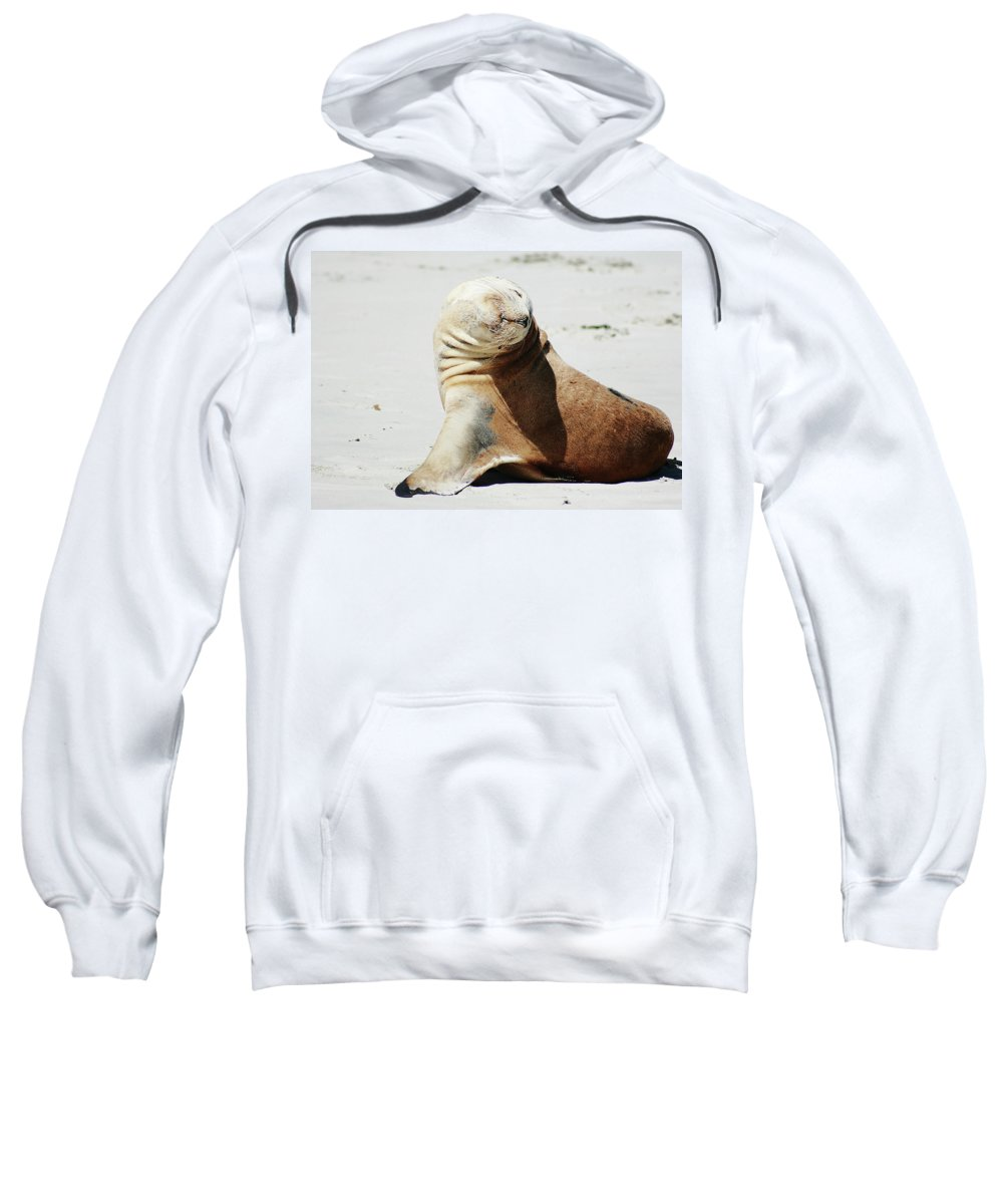 Sea Lion Sweatshirt featuring the photograph Poser by Douglas Barnard