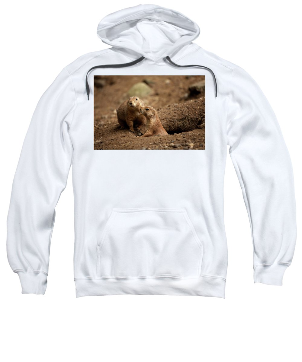 Prairie Dogs Sweatshirt featuring the photograph Prairie Dogs by Karol Livote
