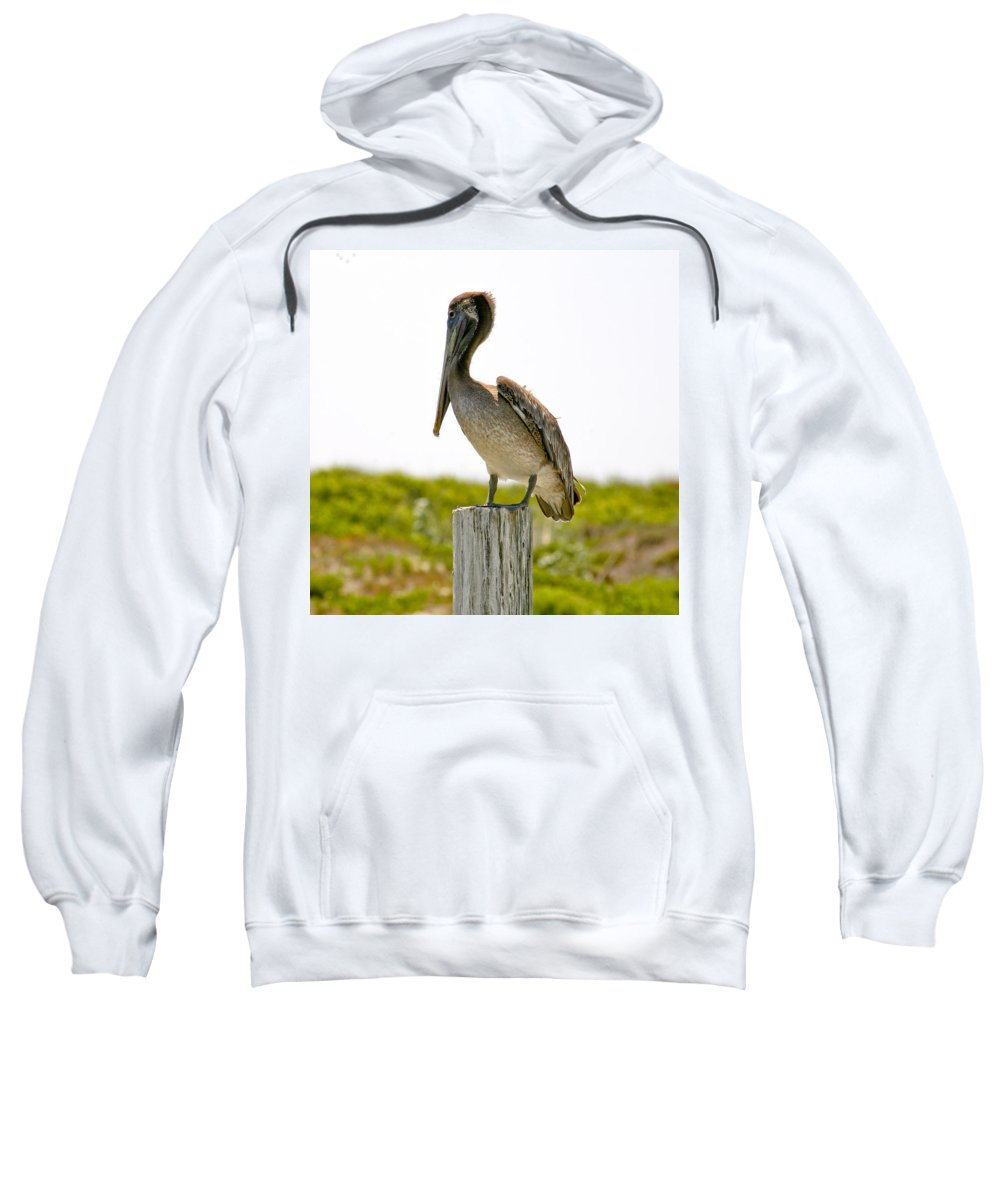 Pelican Sweatshirt featuring the photograph Pretty Pelican by Marilyn Hunt
