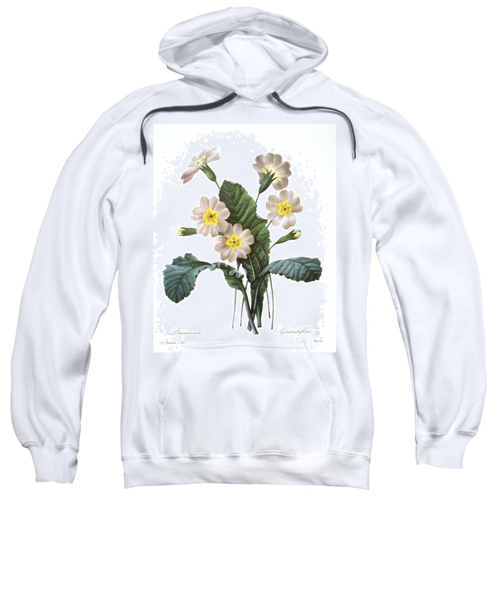 1833 Sweatshirt featuring the photograph Primrose (primula Aucalis) by Granger
