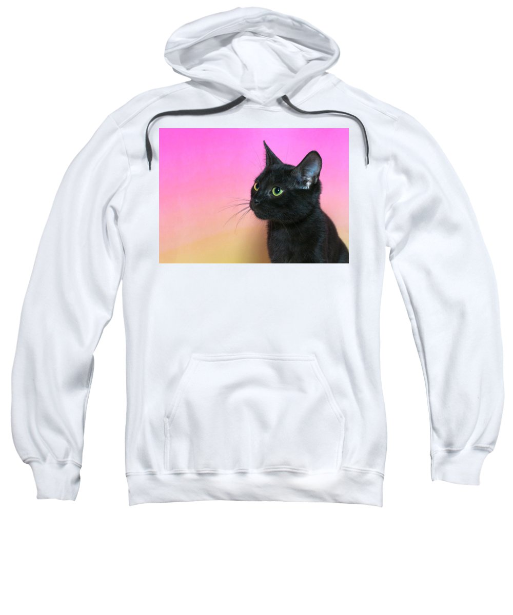 Adorable Sweatshirt featuring the photograph Profile Portrait Of A Black Kitten by Sheila Fitzgerald