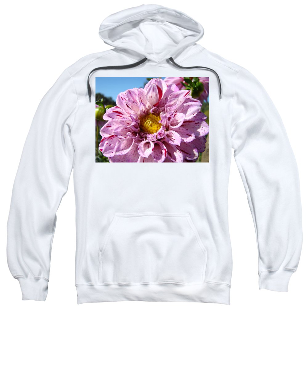 Dahlia Sweatshirt featuring the photograph Purple Dahlia Flowers Pink Floral Art Prints Canvas Garden Baslee Troutman by Baslee Troutman