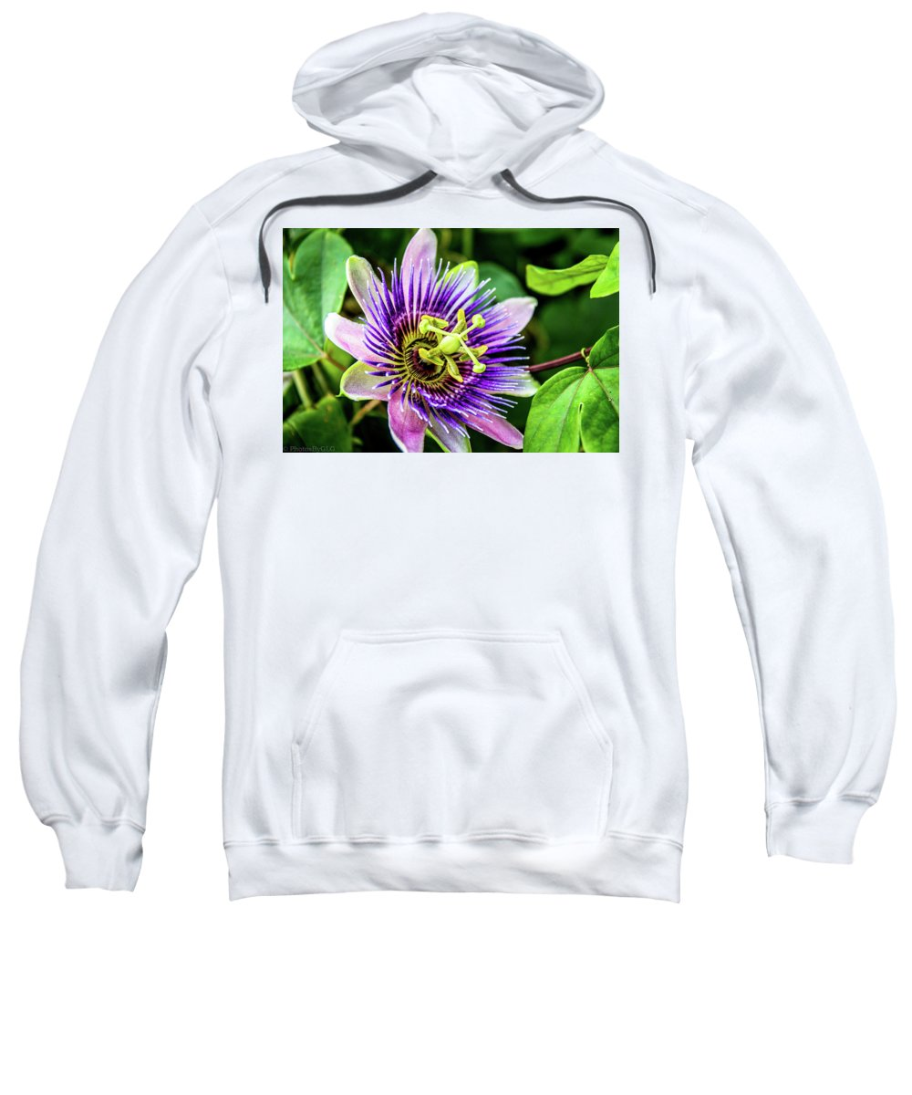 Aromatic Sweatshirt featuring the photograph Purple Passion Bloom by Gregory Gendusa