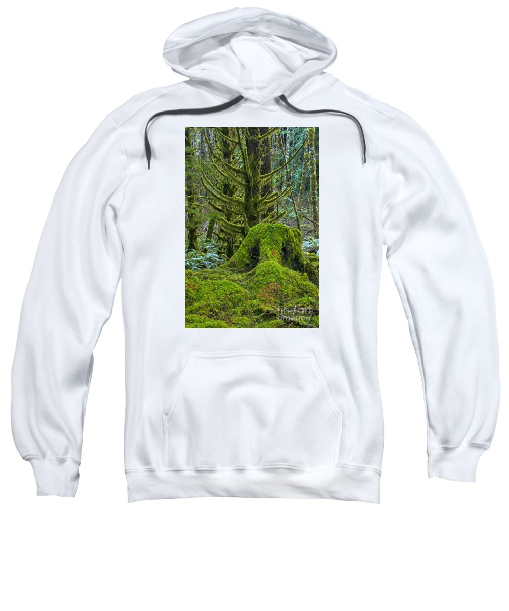 Sweatshirt featuring the photograph Rainforest Portrait by Adam Jewell