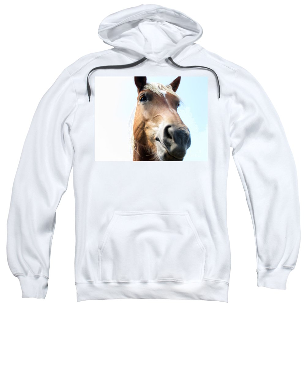 Horse Sweatshirt featuring the photograph Really by Amanda Barcon