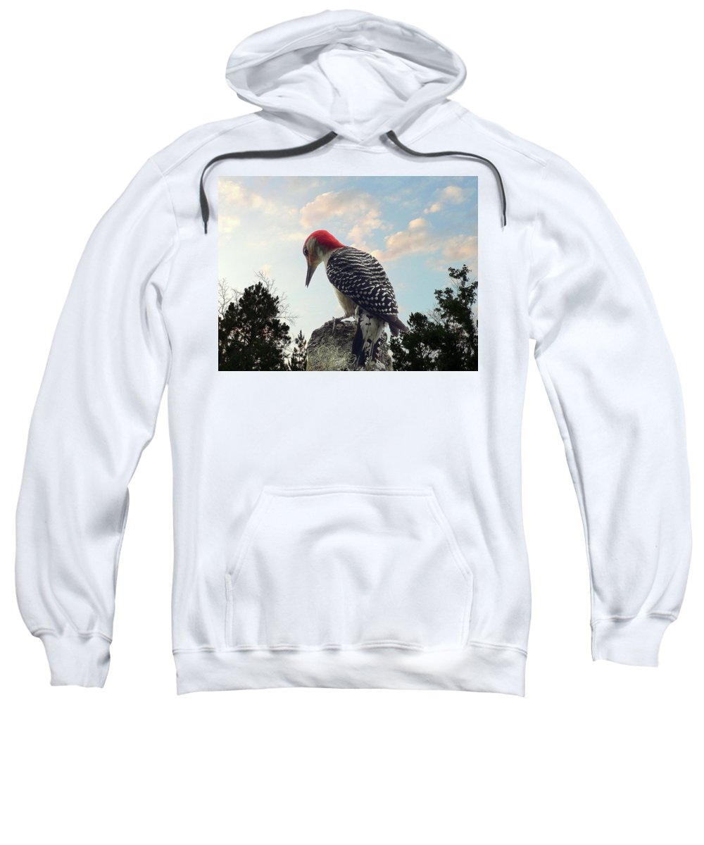 Nature Sweatshirt featuring the photograph Red-bellied Woodpecker - Tree Top by Al Powell Photography USA