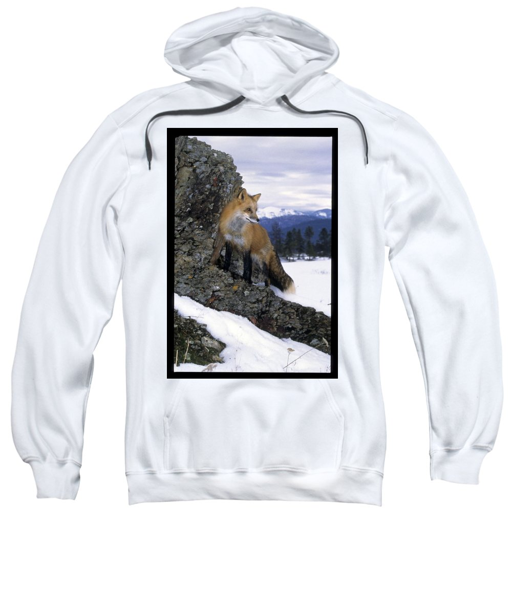 Wildlife Sweatshirt featuring the photograph Red Fox In The Mountains by Larry Allan